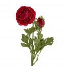 Ranunculus Flogo, 1 flower, 1 bud, L40cm, burgundy